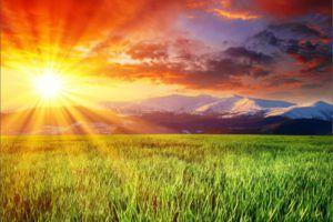 Язык Солнца