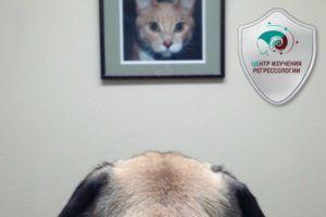 Домашние животные. Исследование